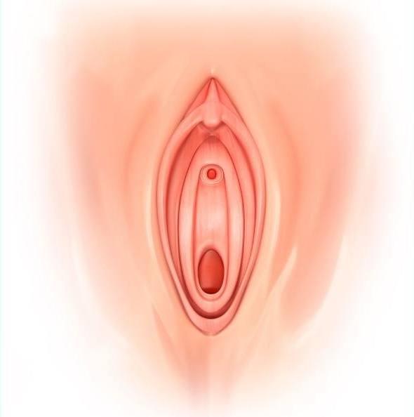 女性生殖器