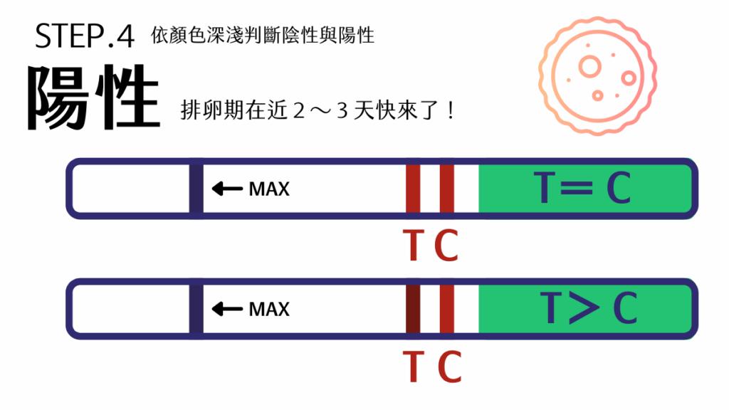 陰性:試紙呈現僅C出現、C>T(依深淺判斷),代表離排卵期還有段時間,可以繼續每天觀察監測。